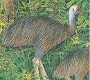 Emuarius
